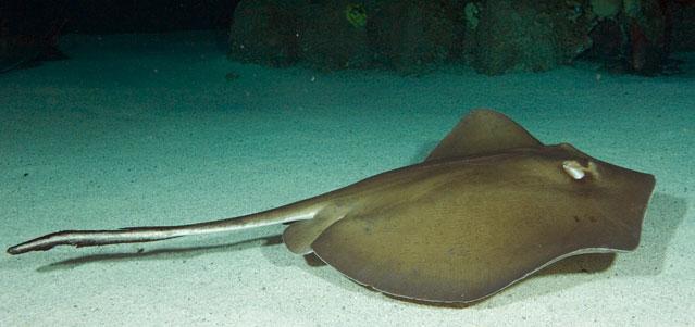 Mandalay Bay | Shark Reef | Animals